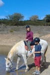 Algarve pony trekking