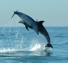 Cascais dolphin watching tour