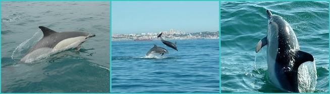 Cascais dolphins