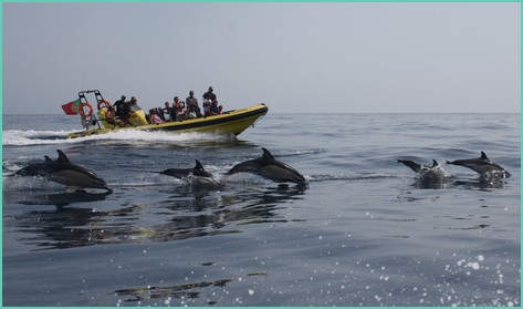 dolphin watching boat trip