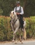 Lusitano for sale