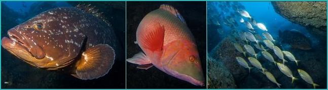 Madeira diving