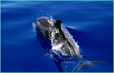 Madeira dolphin watching trips