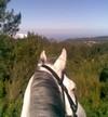 horse riding Madeira