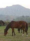 pony treking in Peneda Geres, Portugal