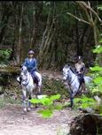 Madeira riding