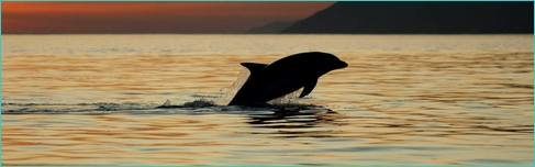 sunset dolphin watching in Setubal