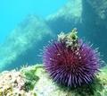 diving in Vilamoura