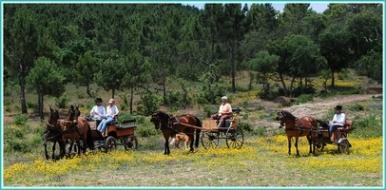 western Algarve horse riding