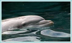 a wild dolphin