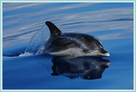 A dolphin in Madeira